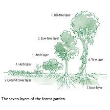 Small Picture How to Design a Backyard Forest Garden Organic Gardening