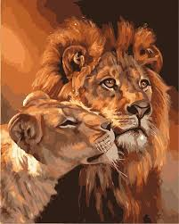 lioness. Wonderful Lioness Lion And Lioness  The Royal Couple Paint By Numbers Kit For Adults  For