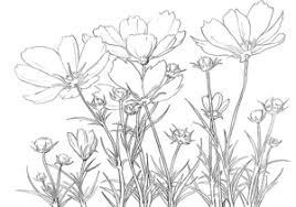 花のブログ美術館 コスモス 色鉛筆超細密画 塗り絵で癒し 風景画 花の絵