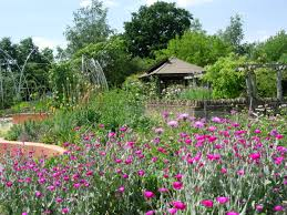 Small Picture Garden Design students to work with award winning designer on