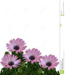 Small Picture Daisy Floral Page Border Royalty Free Stock Image Image 4706236