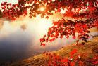 """Результат пошуку зображень за запитом """"осінь"""""""