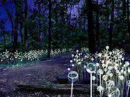 coming attraction light at longwood gardens a stunning property wide outdoor light installation and exhibition by acclaimed british artist bruce munro