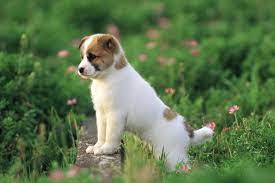 Cute Dog Wallpapers - Top Free Cute Dog ...