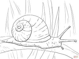 Small Picture Garden Snail coloring page Free Printable Coloring Pages
