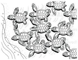 Sea Turtle Coloring Page Scbu Coloring Pages Of Sea Turtles Cute