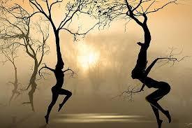 Risultati immagini per immagini particolari di alberi che innalzano al cielo i loro rami nudi