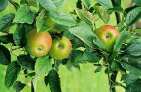 How To Identify Fruit Trees By Leaves  HunkerFruit Tree Leaf Identification