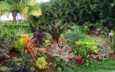 Small Picture Tropical Garden Design Tropical Gardening Tropical Flower Garden