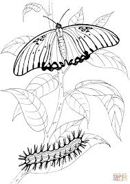 Small Picture Caterpillar and Buttefly 3 coloring page Free Printable Coloring