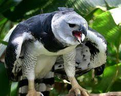 В мире животных: лучшие изображения (65)   Rare animals ...