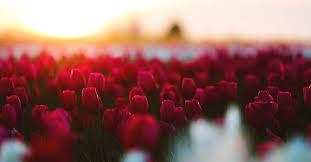 flowers will do best in your garden