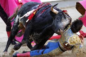 bull fighting injuries. Exellent Fighting Injured Matador On Bull Fighting Injuries Daily Star