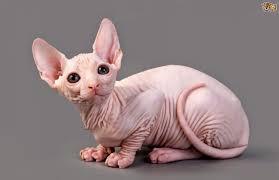 Resultado de imagen de gatos