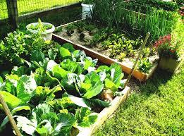Kitchen Garden Blog Lawn Garden Small Backyard Landscaping Ideas Home And Design
