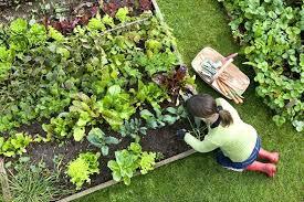 best soil for vegetable garden. veg garden soil veggie vegetable mix nz . best for o