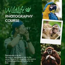 wildlife collage template