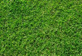 soccer field grass texture. Download Green Grass Texture. Lawn Soccer Field Background Stock Photo - Image Of Clean Texture 1
