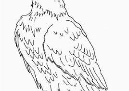 Bald Eagle Coloring Page 12 Unique Bald Eagle Coloring Page