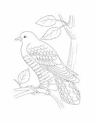 Birds Coloring Pages 17 Birds Kids