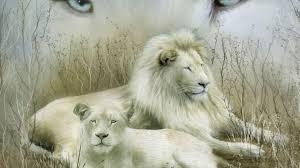 hd white lion photo