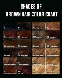 Shades Of Brown Paint Chart Vraf Info