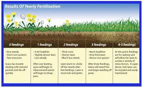 The A Z Guide To Fertilizing New Grass Seeds For A Lush Lawn