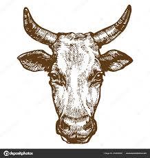 корова голова быка рог домашних животных чернилами эскиз рисованной