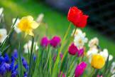 https://encrypted-tbn0.gstatic.com/images?q=tbn:ANd9GcS90ptvLElMhFeo7s7Vbngv2csfxKw8yj0vgEsMTMG_ObCVrVFC33hEZnNoeQ:https://upload.wikimedia.org/wikipedia/commons/9/92/Colorful_spring_garden.jpg&s