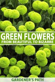 small green flowers names