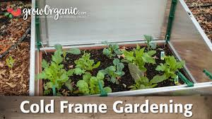 cold frame garden. Perfect Frame What Is Cold Frame Gardening Throughout Garden D