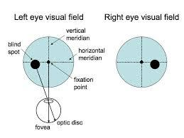 Visual Field Chart Interpretation Perception Lecture Notes Lgn And V1