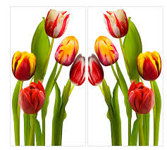 >canvas wall art affordable art by artist jackie jacobson canvas art tulips