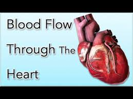 Flow Chart Of Nervous System In Human Beings Blood Flow Through The Heart Animation Made Easy