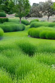 Small Picture Captivating 90 Green Garden Design Decorating Inspiration Of 20
