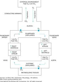 Gas Exchange Chart Pin By Samantha Seager On Anatomy Physiology Respiratory