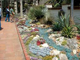 Small Picture Cactus Succulent Garden Design At Ideas With Designs Pictures