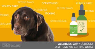 The Real Reason Your Dog's Allergies Are Getting Worse And Not Better!