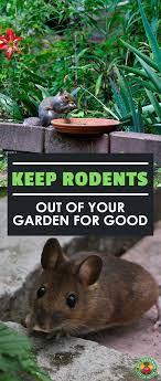 garden pests garden pest control