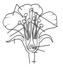 part+of+flowers1 parts of flower parts of plant kindergarten worksheet guide on structure of flower worksheet