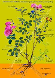 Donde Comprar Colorante Alimentario Rosall Duilawyerlosangeles