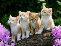 cute cats and kittens wallpapers. Fine Kittens Kittens Wallpaper Cats Animals Wallpapers Inside Cute And P
