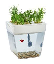 Cool Aquariums For Sale Amazoncom Back To The Roots Water Garden Amazon Launchpad