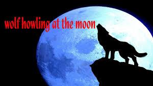 воющий на луну волк картинки