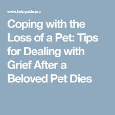 Image result for pet support loss