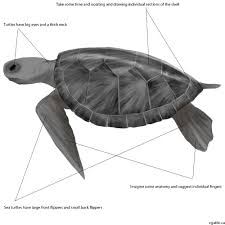 Small Picture Turtle Drawing Guide Learn Sketching Tips for How to Draw a Turtle