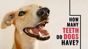 Dog Teeth Health Chart How Many Teeth Do Dogs Have All Dog Dental Questions