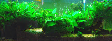 Image result for Aquariums can be extremely heavy