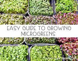Microgreen Growing Chart Easy Guide To Growing Microgreens The Micro Gardener