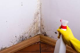 how to cleanup mold on walls mold